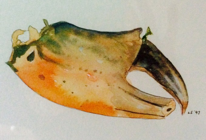 Claw, watercolour, 15 x 18 cm.