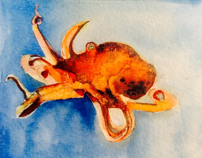 Octopus, watercolour 15 x 12 cm