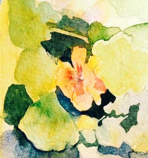 Nasturtium, watercolour 12 x 12 cm