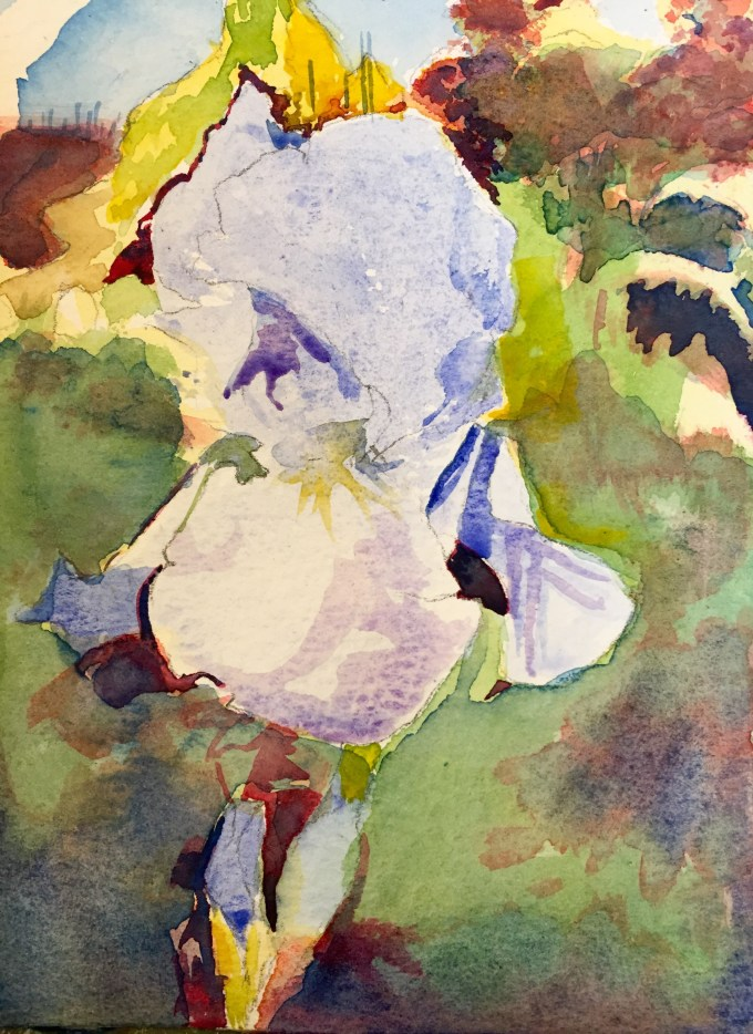 Blue Iris, Watercolour, 11 x  15 cm