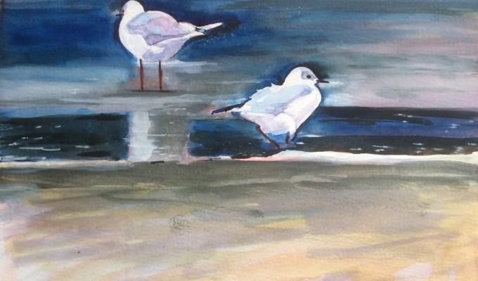 Gulls, New Polzeath II