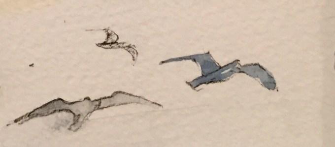 Gull Study, Watercolour, 11 x 5 cm
