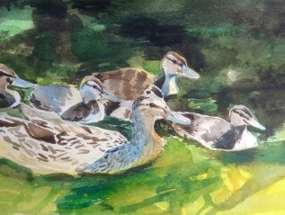 Selected Painting for Society of Wildlife Artists Annual Exhibition 29th October-November 8th 2015 SOLD