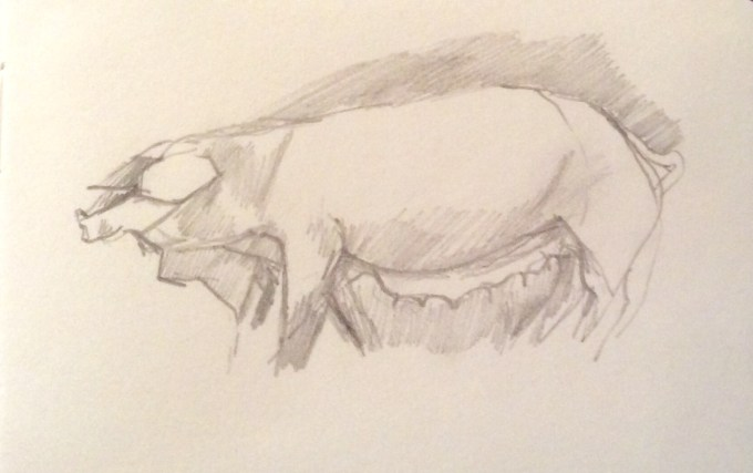 Pig, graphite on paper, 12 x 5 cm