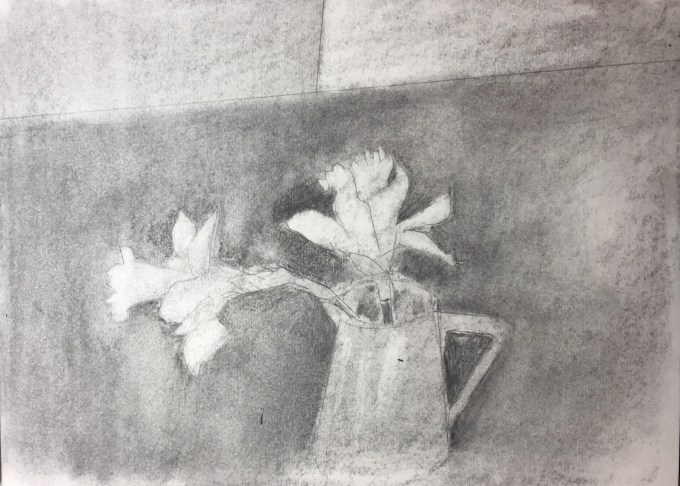 Daffs Emerging, charcoal on paper