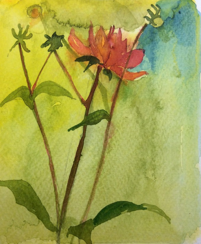 Dahlia, watercolour sketch