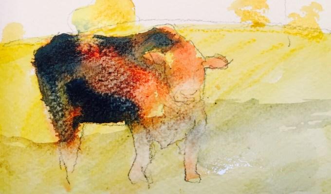 Bull beginning