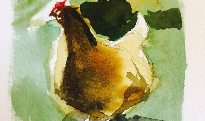 Curious Hen