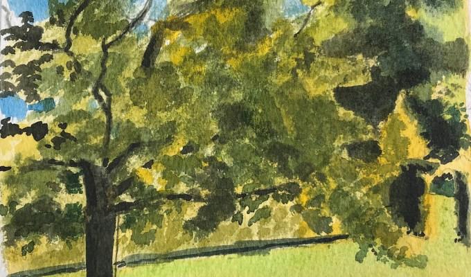 Oak in May II