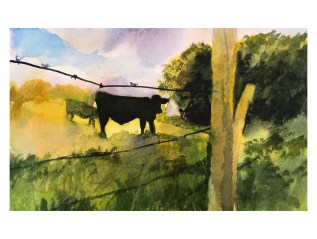 September Cattle