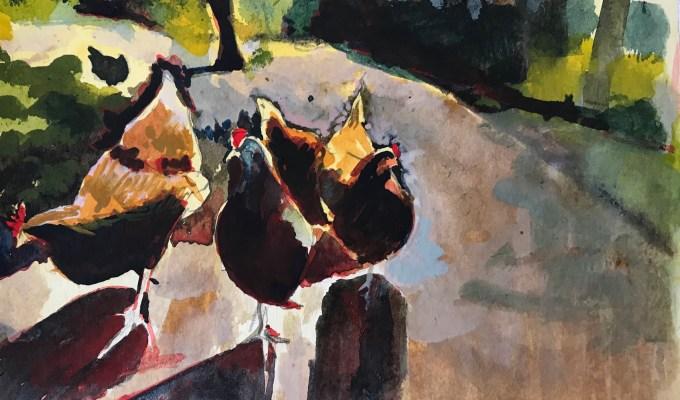 Spring Chickens, Wiltshire