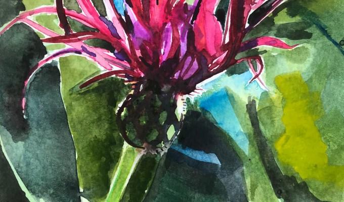 Centaurea Montana.