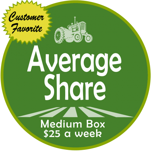 Average Share (Medium Box)