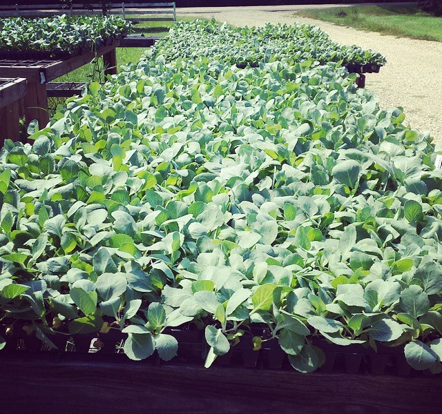 Seedlings for Fall 2014