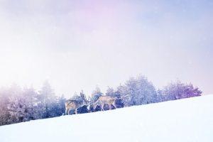 冬に楽しい旅行先でデートしよう!女子旅は国内がおすすめ&人気