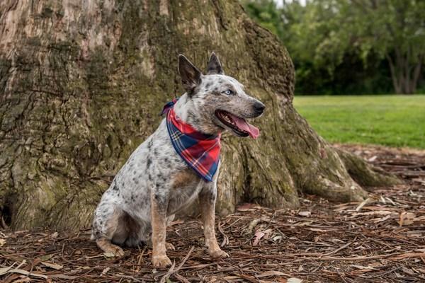luck of tuck dog bandanas