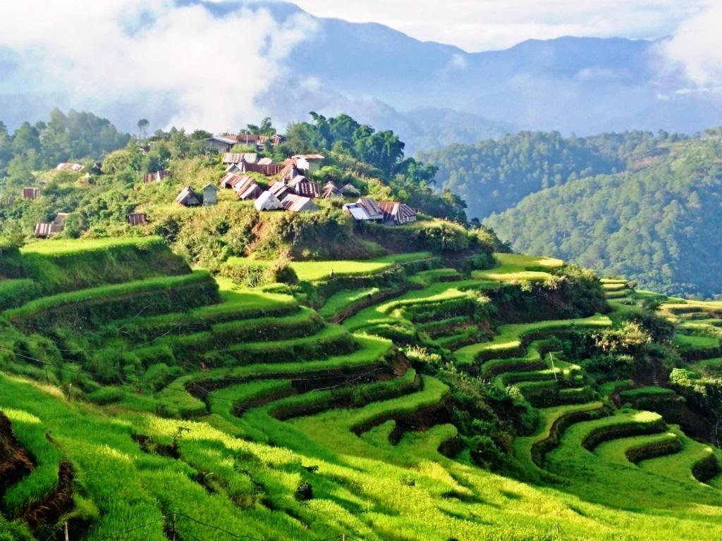 Maligcong Rice Terraces  Luckwhatcha