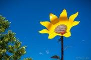 20140628 Loveland Garden Tour-49_WEB