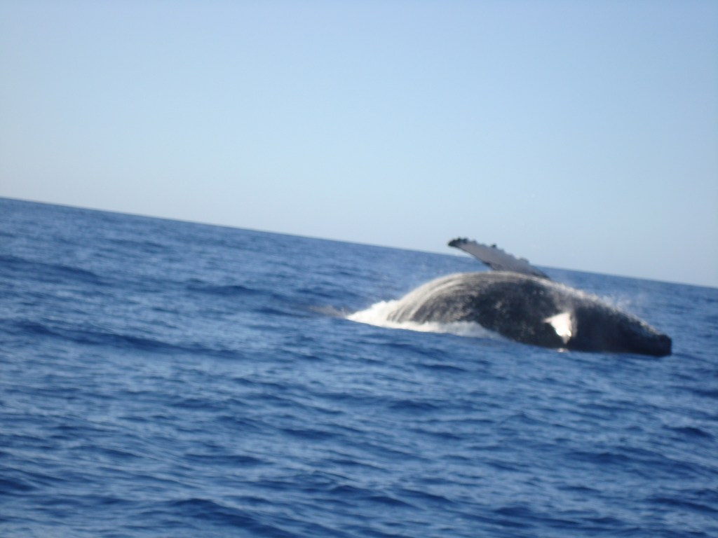 whale sighting Maui