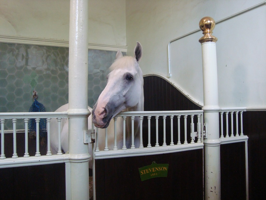 Royal mews - horse stable