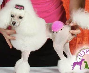 Lucky Dawg Pet Grooming Services in Torrance, CA