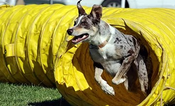 Intro to Agility (Level 1A & 1B)