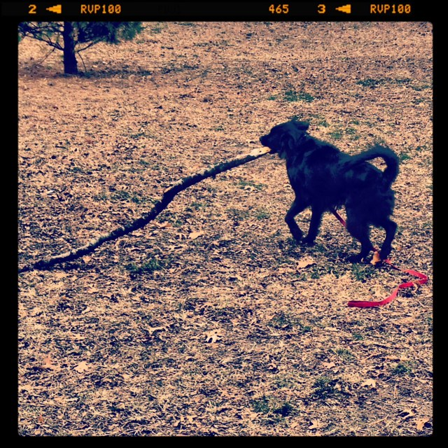 Small dog, big stick
