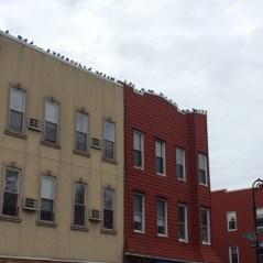 Greenpoint birds