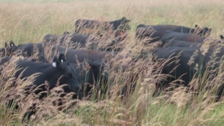 Now thats Tall Grass!