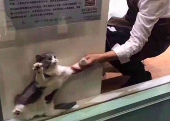 lucloi.vn_Cat Being Dragged From Window
