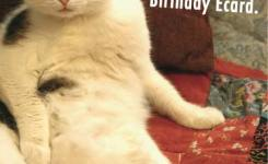 Real Card Funny Cats Birthday A Cat Says That He Would Have Gotten You A Real