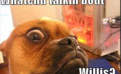 Funny Animal Pictures With Quotes Google Search
