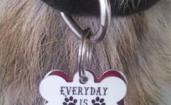 Real Life For Dogs Funny Collar Tags __