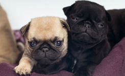 Cute Small Dog Breeds We Cant Get Enough Of