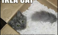 Thought Provoking Cat Quotes By Carl Van Vechten