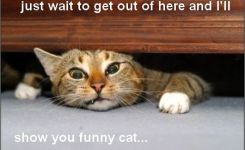 Cute Cats And Cat Gifts Funny Cats With Captions Funny Cats