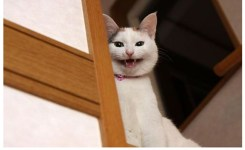 Evil Cat At The Door Funny Picture