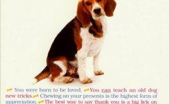 All I Need From Dog Funny Humorous Birthday Card By Portal Publications