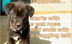 Dog P Os With Quotes Happiness Starts Jpg X