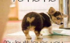 As The Quote Says Description  Best Funny Animal Quotes And Funny Memes