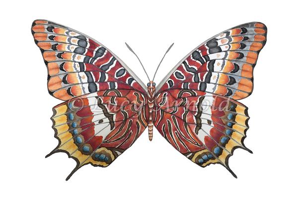 Bugs & Butterflies - Fine Art Of Lucy Arnold