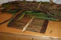 Brushing the fibers from the New Zealand flax