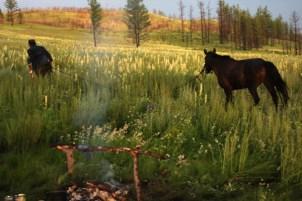 Chimeet and his horses, Khentii, East Mongolia