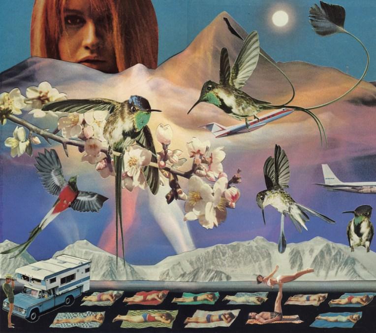 Lucy Dyson hummingbirds