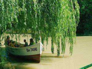 boat Swallow White Kamchia