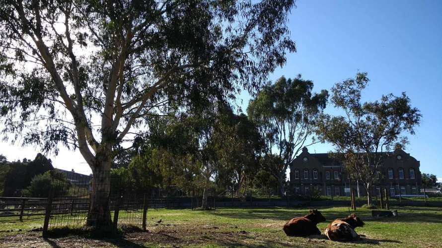 campagna con mucche, albero e grande casa