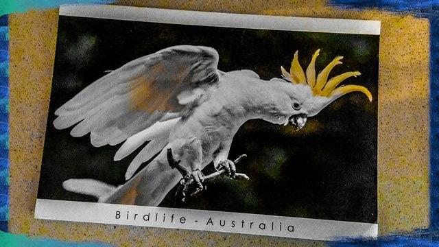 Cartolina dall'Australia