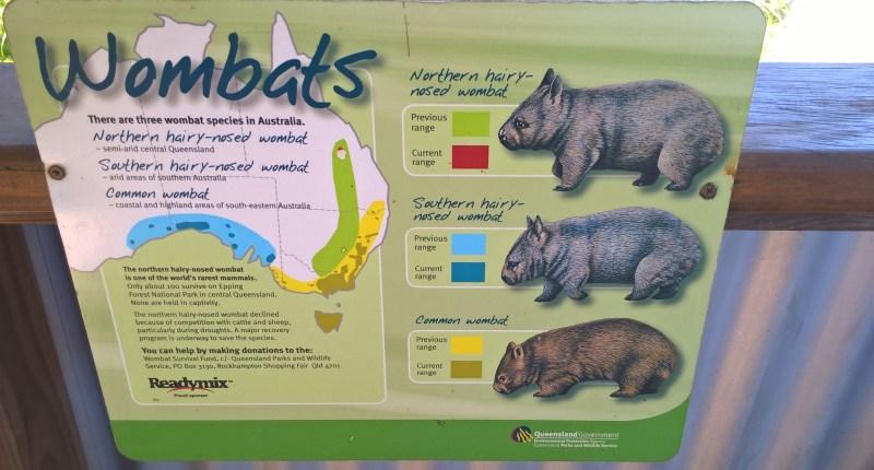 Vombato tassonomia - tre tipi di vombato