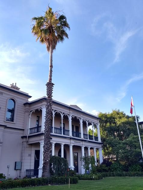 Palazzo elegante con palma alta
