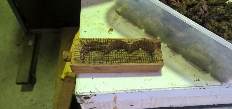 scatola-trasportino per spostare l'ape regina